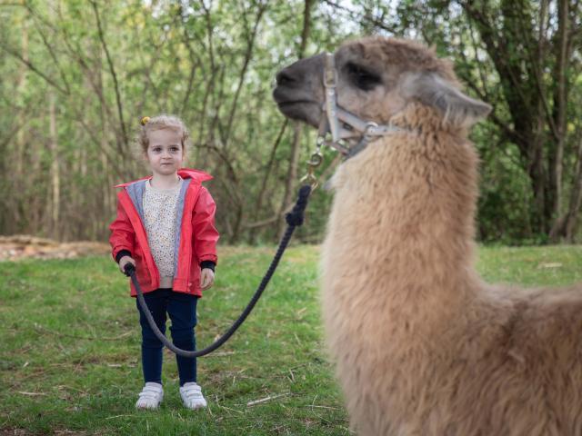 Lama et une enfant