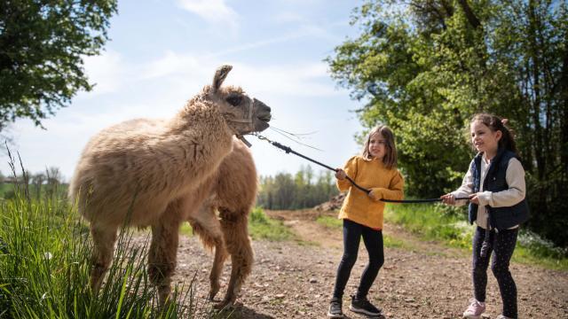 Enfants et Lama