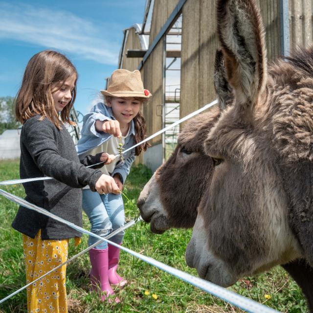 Deux enfants et deux ânes
