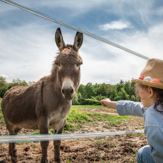 Une enfant et un âne