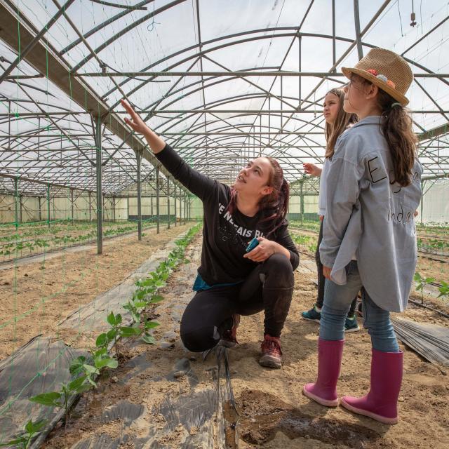 Culture de légumes sous serres