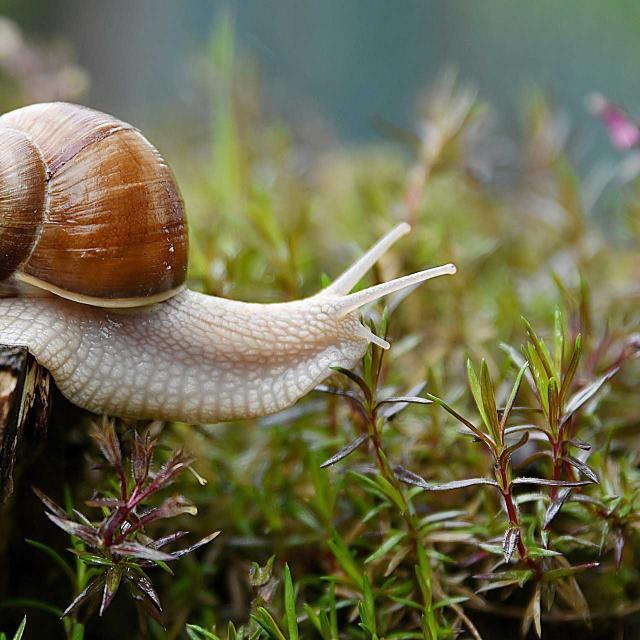 ©pixabay Snail 4729777 1920