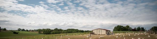 Volailles de Bresse en extérieur