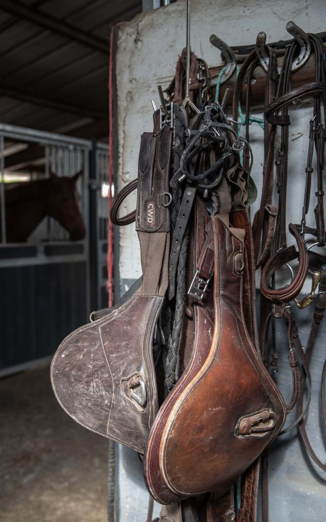 Equipement chevaux selles, étriers, licol