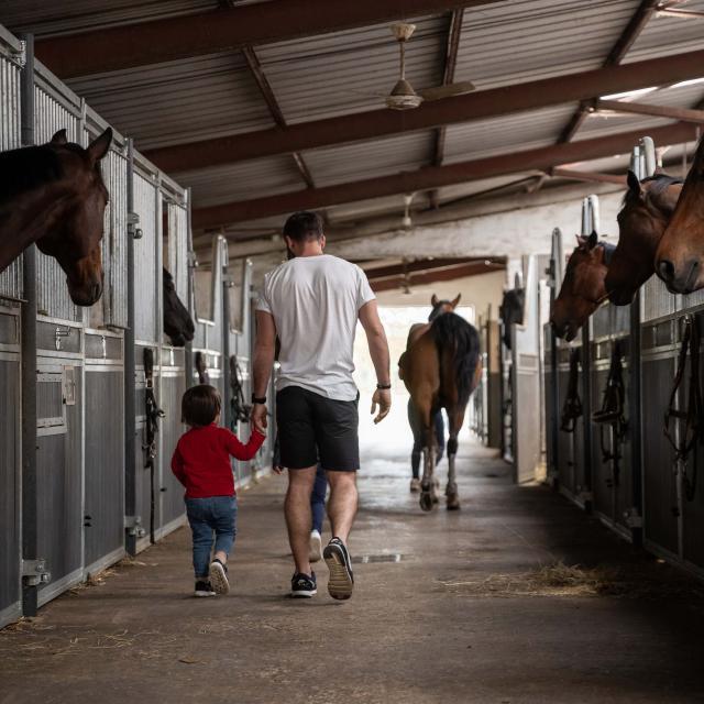 Boxes chevaux Ecuries Griffond