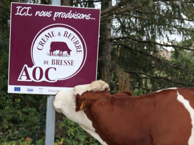 élevage Creme Et Beurre De Bresse