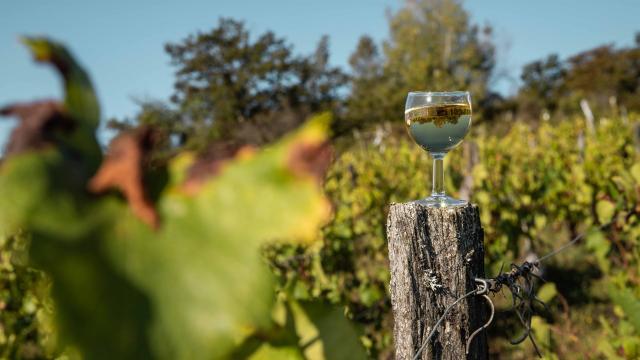 Verre de vin du Bugey