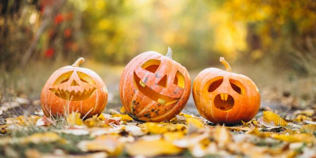 Three Cute Halloween Pumpkins Autumn Park©senivpetro