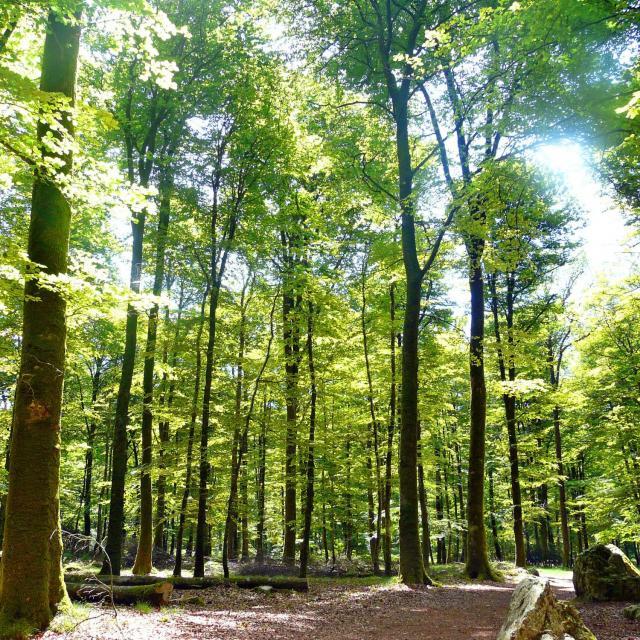 La Forêt de Fougères