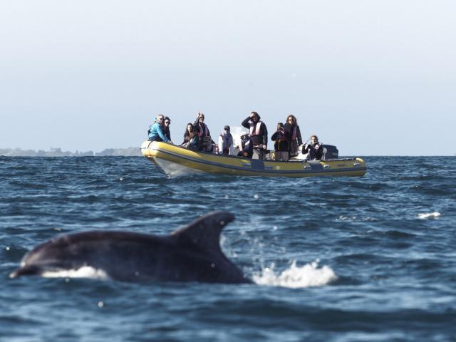 Sortie observation dauphins, Association Al Lark