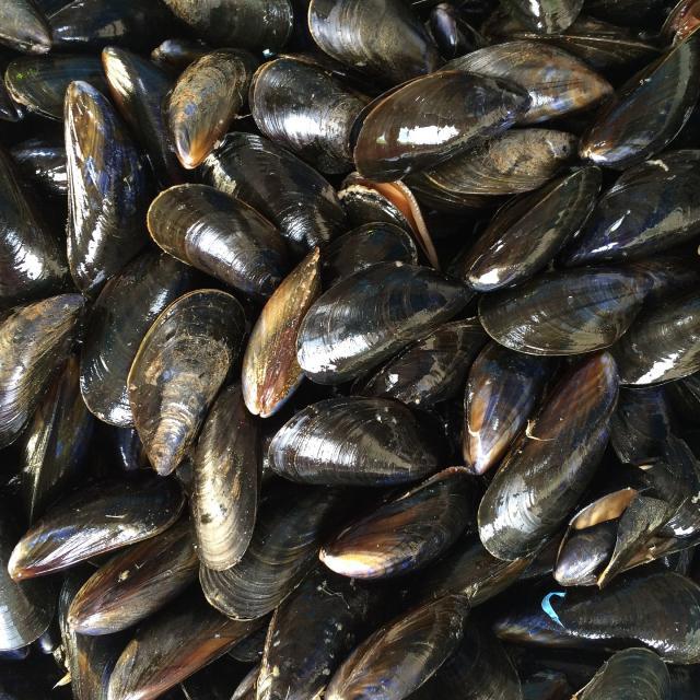 mussels-1665863-1920.jpg