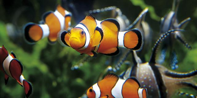 The Grand Aquarium in Saint-Malo