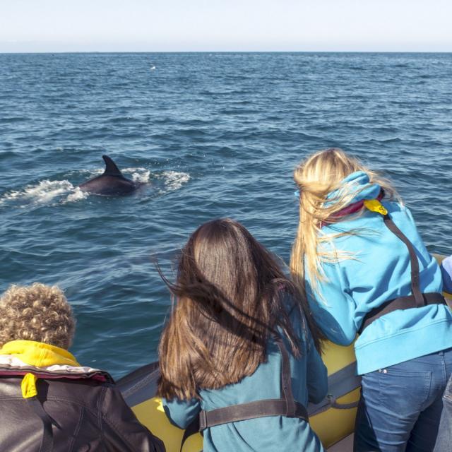 Observation des dauphins, baie du Mont-Saint-Michel