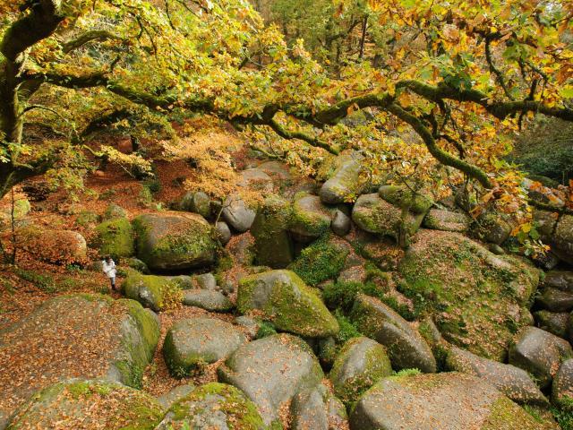 Le chaos granitique de la forêt de Huelgoat à l'automne : le Ménage de la Vierge
