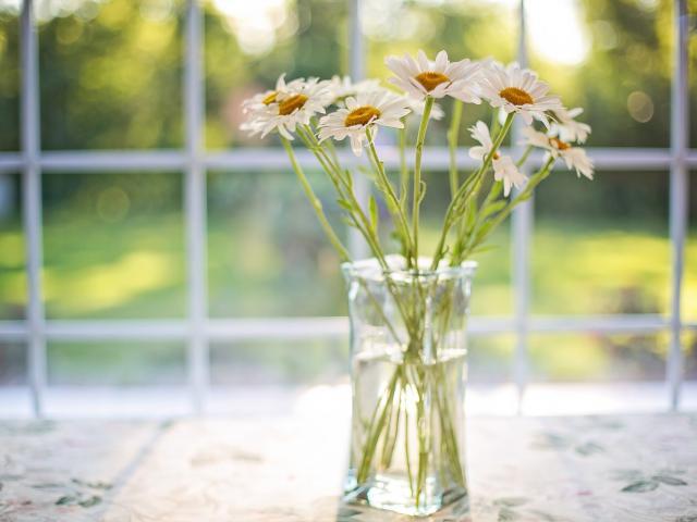 daisies-2485064-1920.jpg