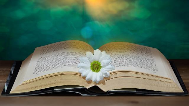 Book 6085258 1920
