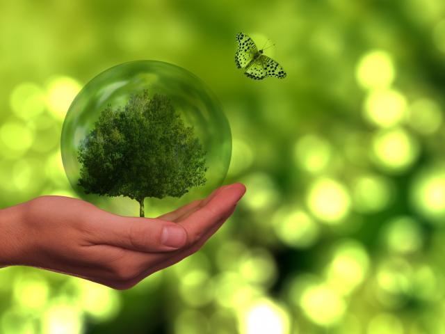 Journee de l'environnement