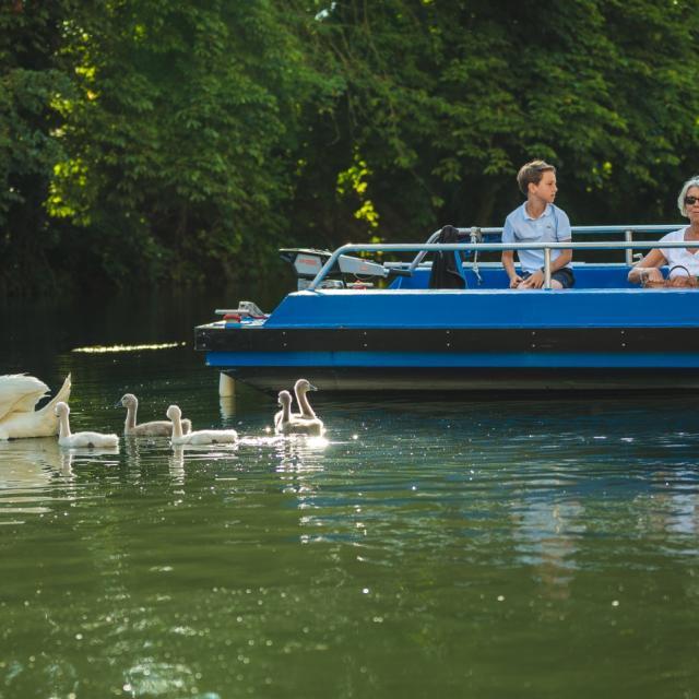 Balade En Barque Eaudyssee Cygnes Famille © Teddy Picaude