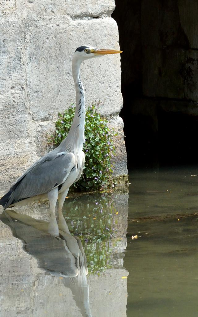 Balade En Barque Eaudyssee Heron Nature © David Billy