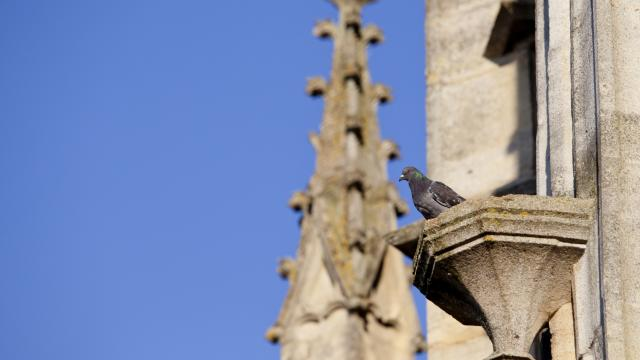 Basilique L Epine Unesco Detail Pigeon © Jean Côme Nicolle