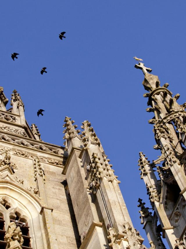 Basilique L Epine Unesco Tours Oiseaux © Jean Côme Nicolle