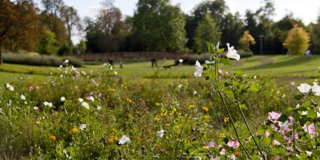 Jard Anglais Chalons Nature Fleurs © Jean Côme Nicolle