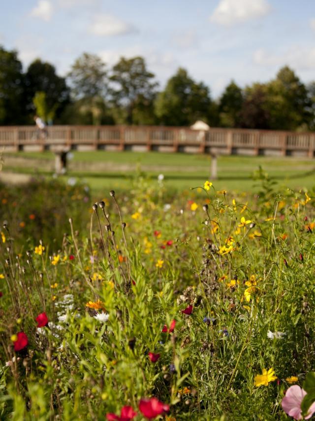 Jard Anglais Chalons Passerelle Fleurs © Jean Côme Nicolle