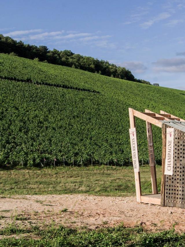 Loge De Vigne 37%