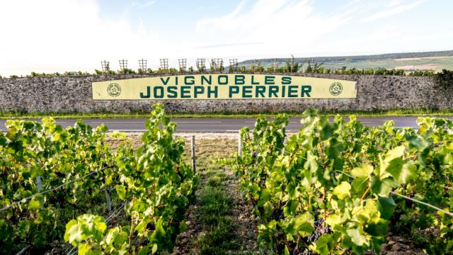 Vignes Champagne Joseph Perrier