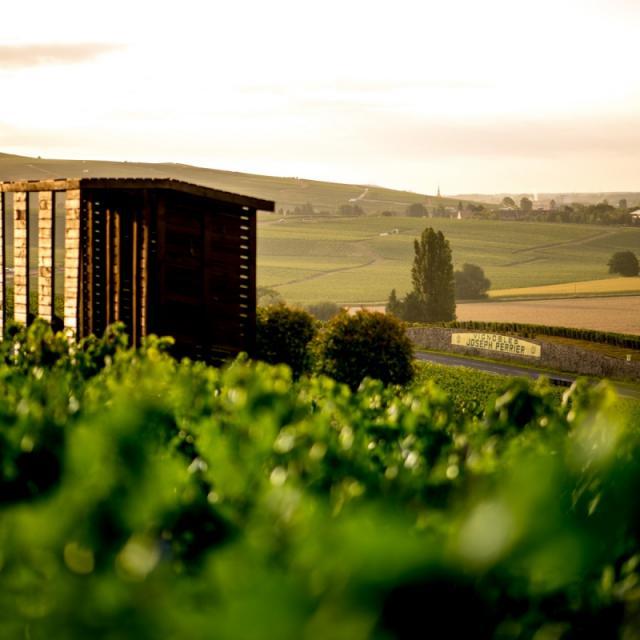 Vignoble Champagne Joseph Perrier Loge De Vigne Sunset