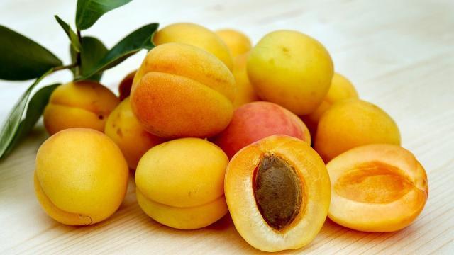 Abricots Fruits Saison Juin