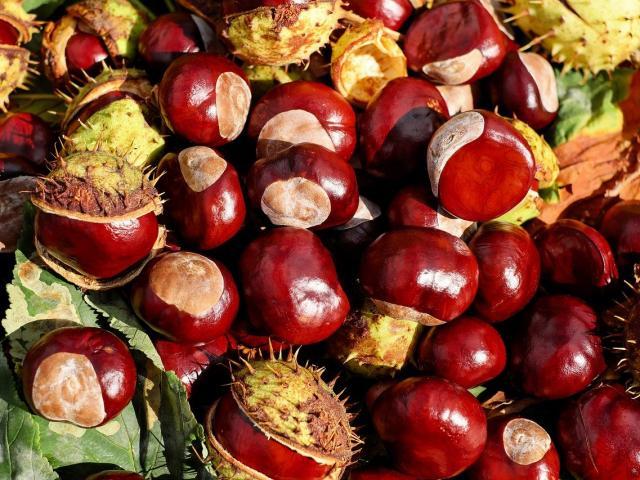 Chataigne Fruits Septembre