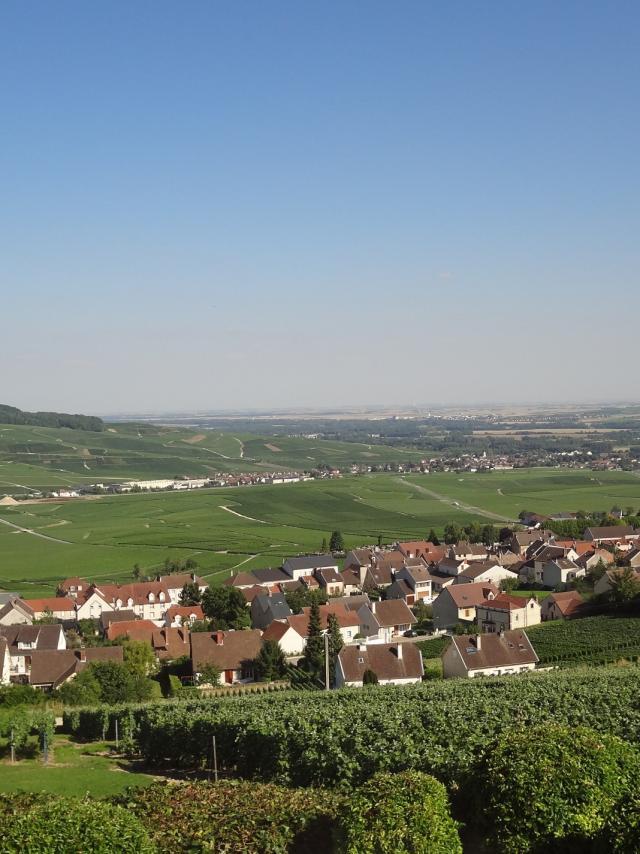 Hautvillers Paysage Vignes
