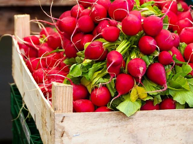 Legumes Printemps Mai Radis