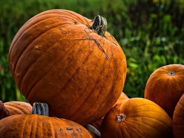 Potiron Legumes Saison Novembre Automne