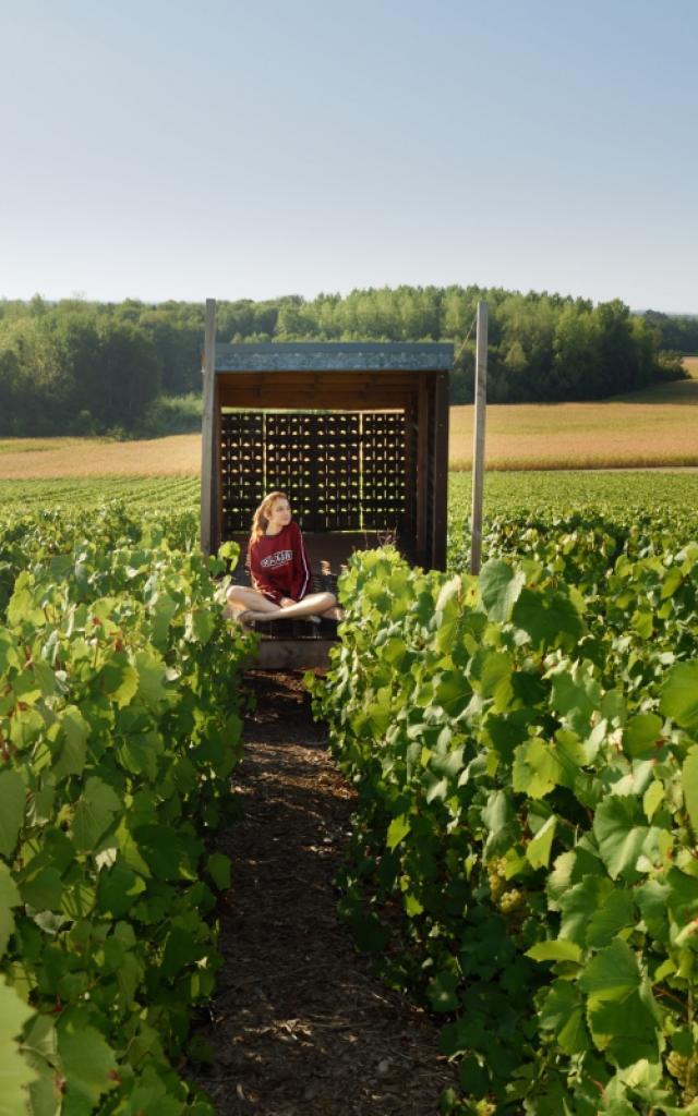 Terroir Vignes Coteaux Vitryats