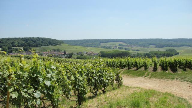 Parc Naturel Regional Montagne De Reims Vignoble