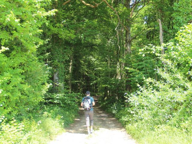Randonnee Parc Naturel Regional Montagne De Reims Foret