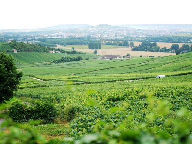00-vignoble-marne-02-crdit-photo-crtca-wang-ting.jpg
