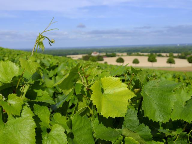 les-vignes-pascal-bourguignon-colletion-ot-lac-du-der.jpg