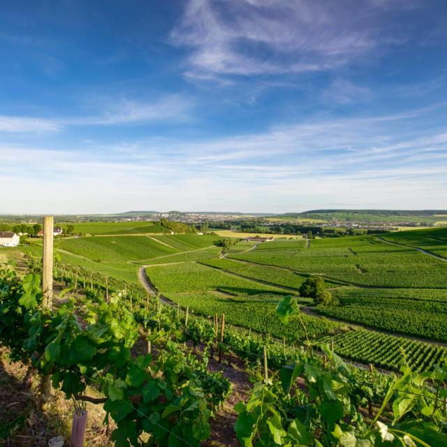 Vignoble Hautvillers ©Fred Laures