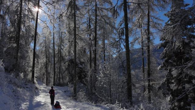 Balade à traction parentale sur les itinéraires nordiques de Champoléon