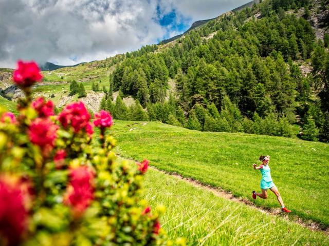 Trail en Champsaur. Traversée d'alpage