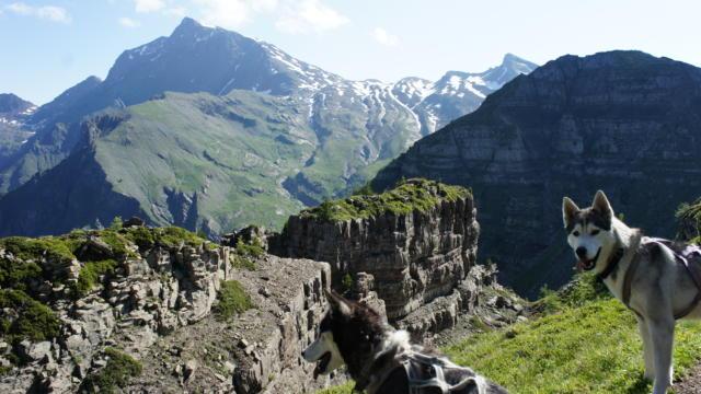 Randonnée au Pic Queyrel avec son chien