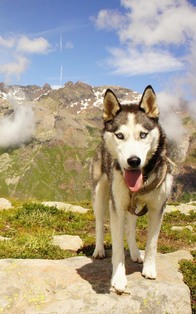 Vue sur le vieux Chaillol en randonnée avec son chien