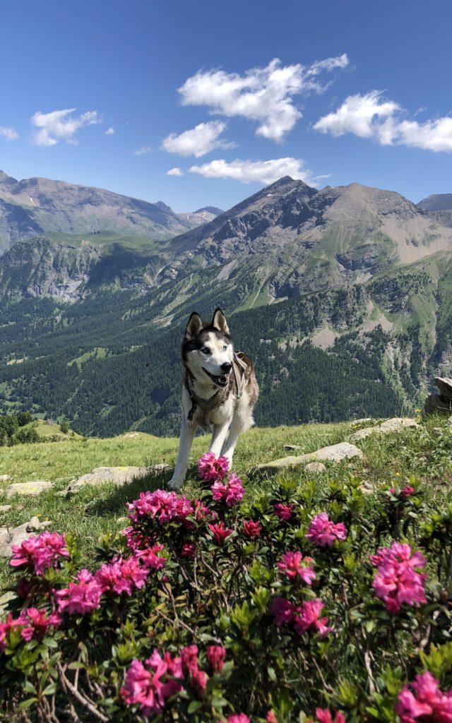 Randonnée avec chien à la Recula dans le Champsaur