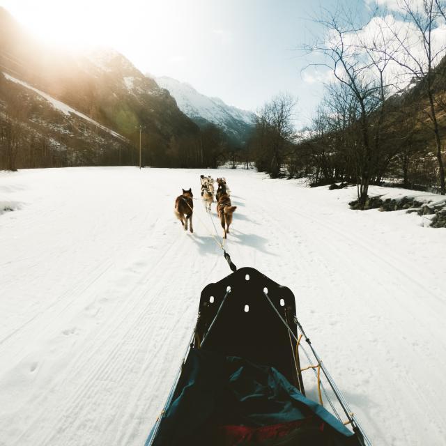 Chiens de traineaux dans le Valgaudemar en hiver