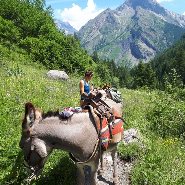Randonnée avec un âne dans le Parc National des Ecrins