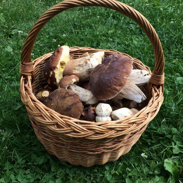 Panier champignons -Ivana Mariankova
