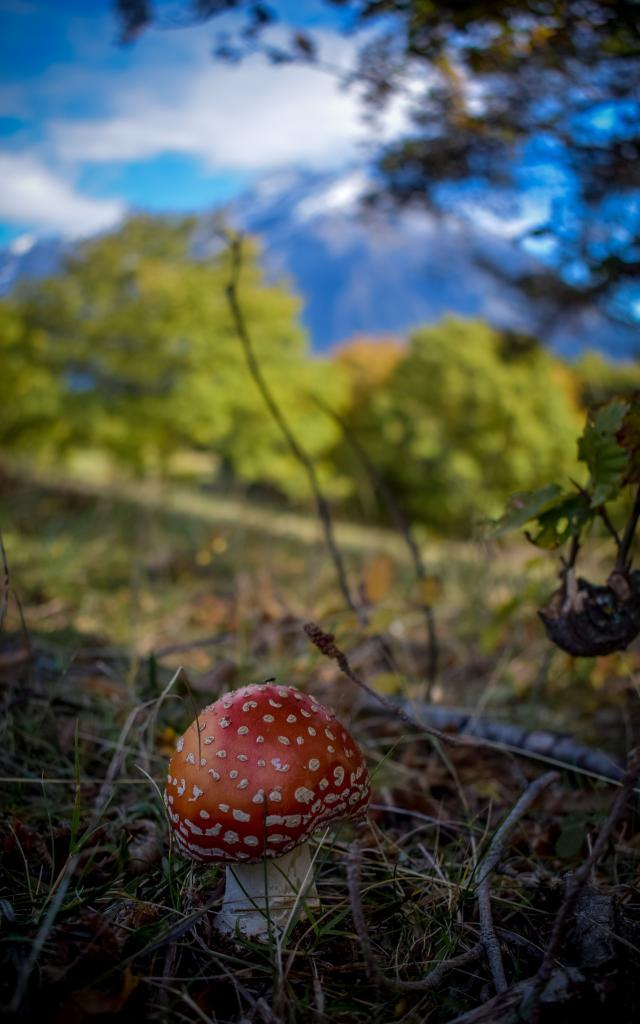 Champignon dans le Valgaudemar